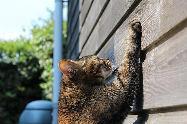 cat-750259_640-1